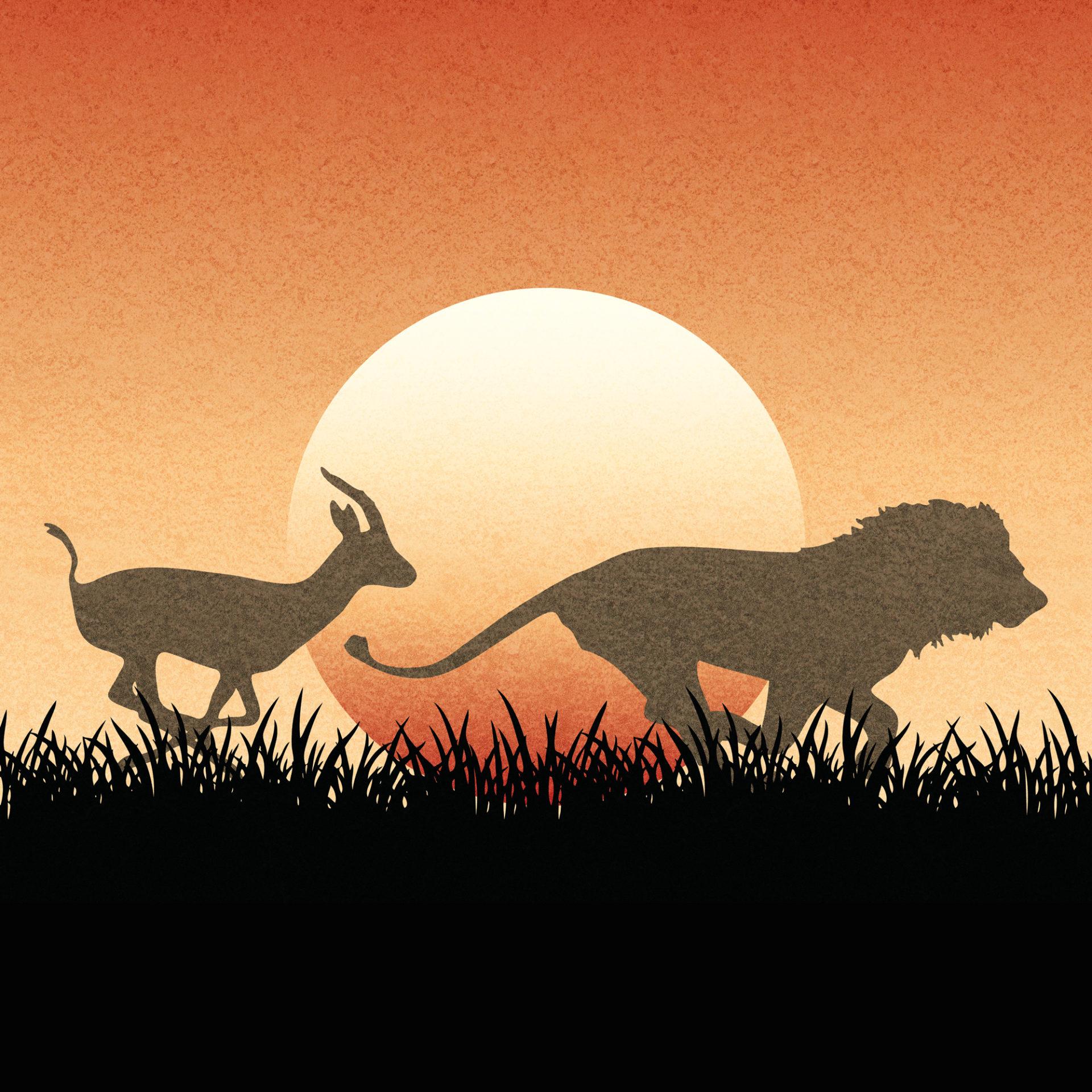 gazzella che rincorre un leone